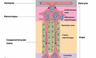 Надпочечники: их строение, топография, кровоснабжение, иннервация, гормоны, гипо-, гиперфункция Кровоснабжение надпочечников анатомия